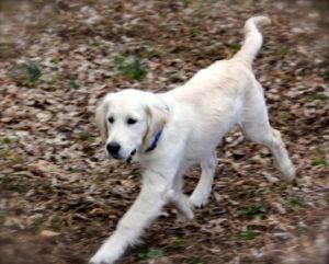 Gretsky having a run in the yard.