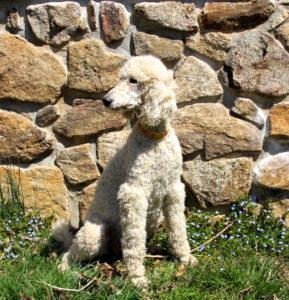 Beautiful Daisy enjoying the sunshine.