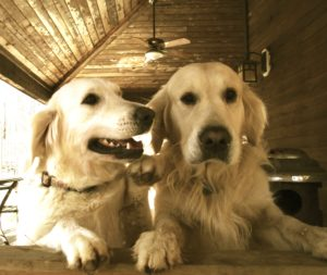 Indy and Poppy - a great couple!
