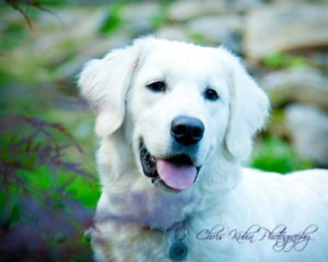 This is Cooper, one of Angie and Indy's pups from last year.