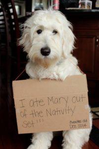 Past Daisy Puppy