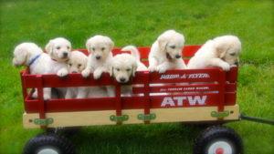 Daisy's pups