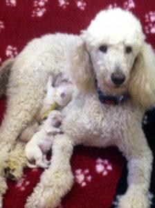 Zeva with her pups