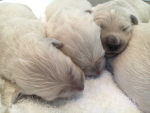 Fendi's puppies